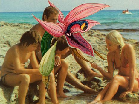 Arnie Arnold: Orchids