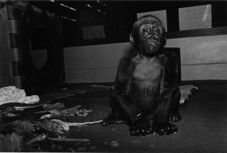 Robin Schwartz: Primate Portraits