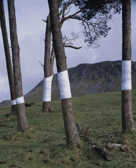 Zander Olsen: Tree, Line