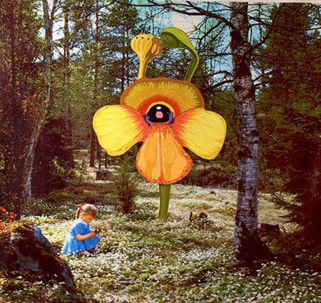 002-sun-orchid