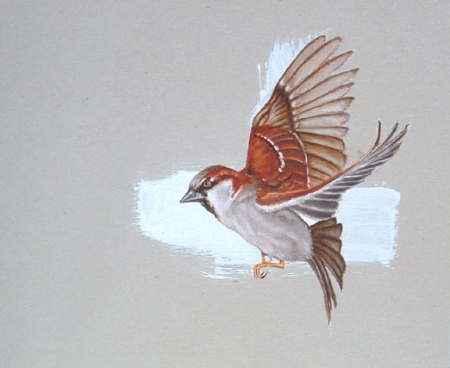 018-male-sparrow.jpg