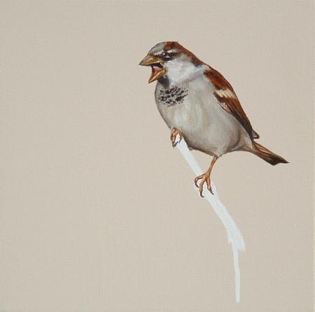 019-house-sparrow.jpg