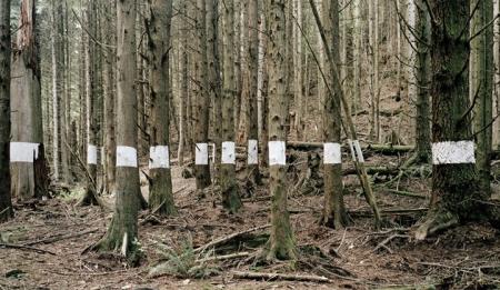 027-landscape-for-benjamin-trees-2005