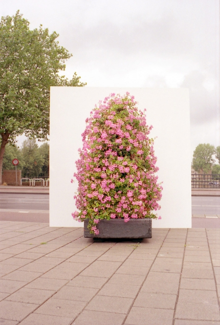 008-geranium-hill