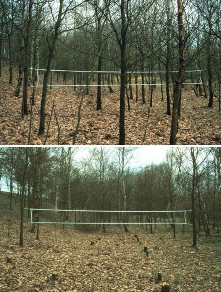 023-badminton-court-hilversum-1997