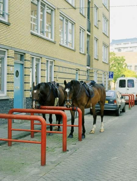 029-2-horses-rotterdam-2001