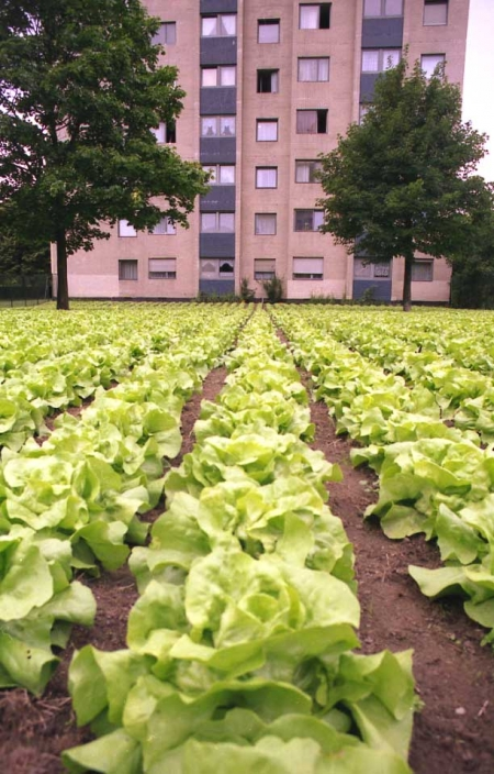 005-lettuce-field-as-big-as-a-skyscraper