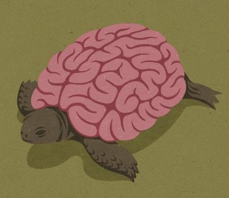 016-tortoise
