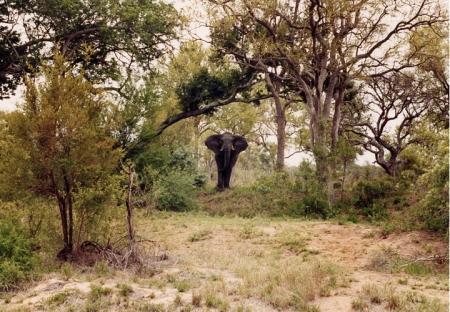 016-africa.jpg