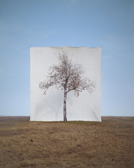 001-tree-1.jpg