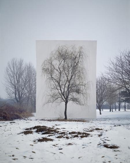 003-tree-3.jpg