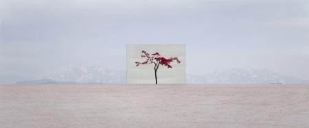 005-tree-5.jpg