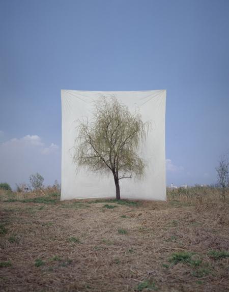 006-tree-7.jpg