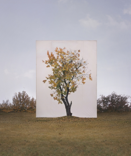 007-tree-8.jpg