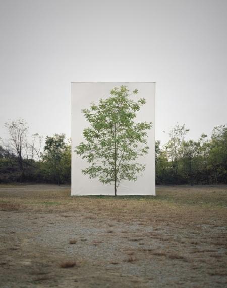 008-tree-9.jpg