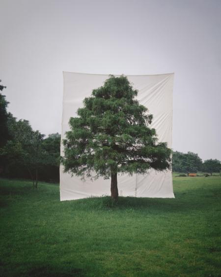 009-tree-10.jpg