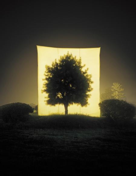 010-tree-11.jpg