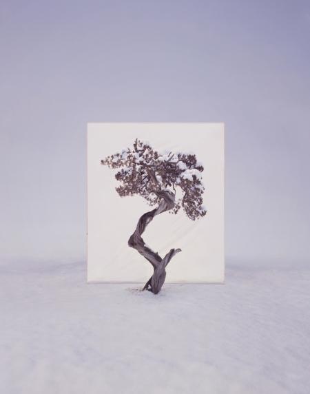 011-tree-12.jpg