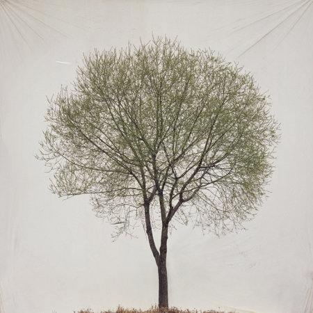 012-tree-13.jpg