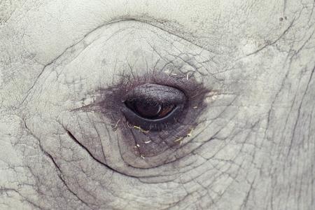 008-rhinoceros