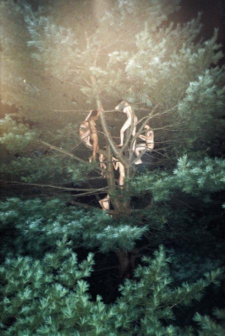 041-tree-3-2003.jpg