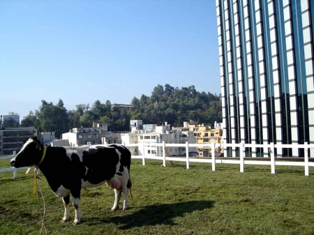 027-the-day-cows-fly