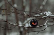 Constantin Bolimond: Sound Of Birds